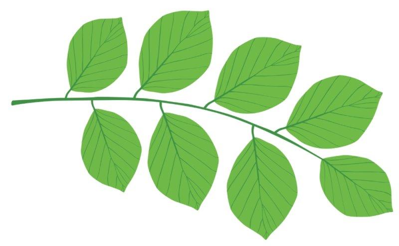 Lemco Grønt Logo Blad